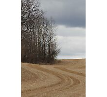 Stubble. Spring time farm land. Ås, Norway, Photographic Print