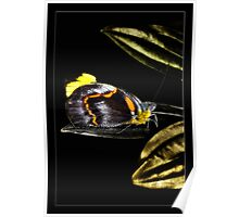 Butterfly 007 Poster