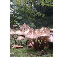 shrooms in the woods Photographic Print