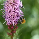Busy Bee by decorartuk