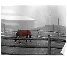 Brown Horse in Fog equine art Poster