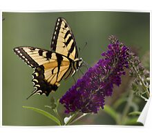 On Brian's Butterfly Bush Poster