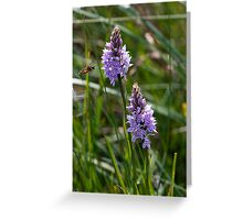 Orchids and Hoverfly Greeting Card