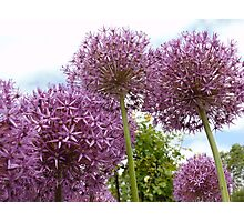 A Wonderful and Special Purple Picture Photographic Print