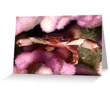 Purple coral crab Greeting Card