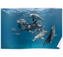 Wild-wild dolphins Poster