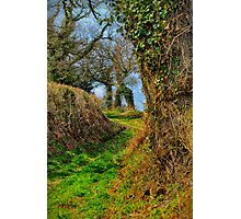 A Norfolk Country Lane Photographic Print