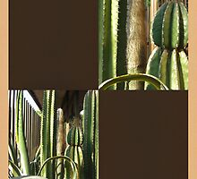 Cactus Garden Blank Q3F0 by Christopher Johnson