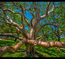 Tree Gone Wild by Edvin  Milkunic