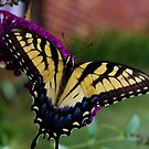 Beautiful Butterfly 2 by Robin D. Overacre