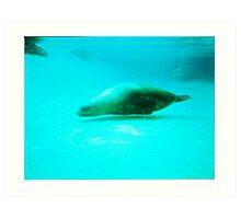 Seal -  Aquarium - Melbourne, Vic Art Print