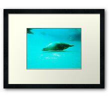 Seal -  Aquarium - Melbourne, Vic Framed Print