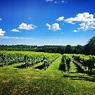 Vineyard in the Sun by kalitarios