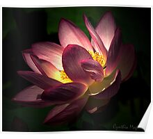 Glow of a Water Lily Poster