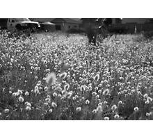 Monochrome - Elysian Field Photographic Print