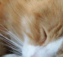Shhh Cuddles is Sleeping Sticker