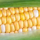 Sweet Corn on the Cob by Kenneth Keifer
