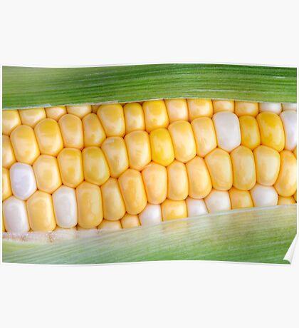 Sweet Corn on the Cob Poster