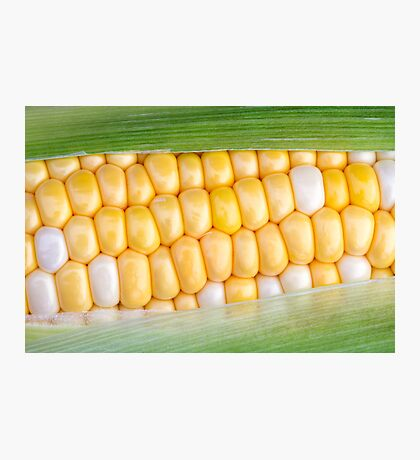 Sweet Corn on the Cob Photographic Print