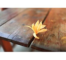 Yellow Flower on Desk Photographic Print