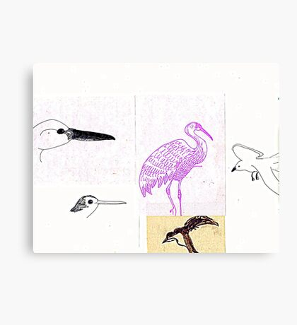 California Bird study 6 Canvas Print