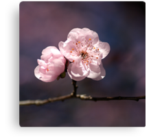 Blossom of PINK Canvas Print