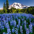Rainier Wears Blue by Dan Mihai