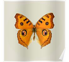 Meadow Argus Butterfly Poster