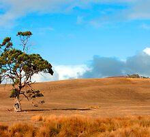 Last Tree Standing by jwwallace