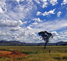 Liverpool Plains by Timothy John Keegan