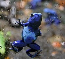 Poison Frog Screen Cling by Copperoxide