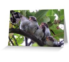 Long Tail Tit Baby 22 Greeting Card