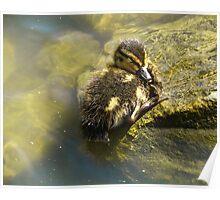Sleeping Duckling Poster