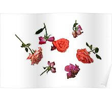 Roses in Different Phases of Wilting Poster