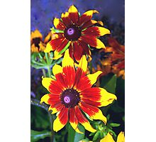 Very bright daisies Photographic Print