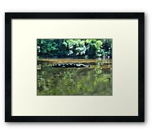 Pictures from the pirate road-trip: Alligator! Framed Print