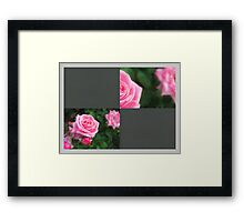 Pink Roses in Anzures 1 Blank Q6F0 Framed Print