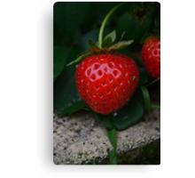 wild strawberry Canvas Print