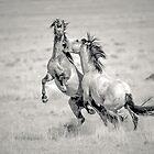 Duel on the Desert by Tom Becker