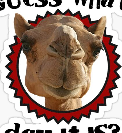 Hump Day Camel - Guess What Day it Is - Wednesday is Hump Day - Parody Camel Sticker