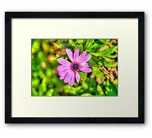 Beautiful Light Purple Flower in Malta Framed Print
