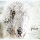 Kisses by Susan Werby
