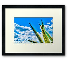 Cactus Plant in Malta Framed Print