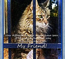 My Friend by Terri Chandler