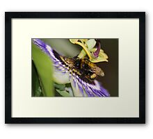 Lunch Time at the Pretty Flower Framed Print