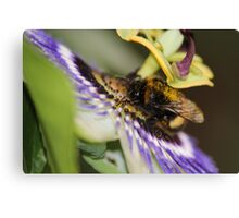 Lunch Time at the Pretty Flower Canvas Print