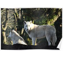 Wolves in the Forest Poster