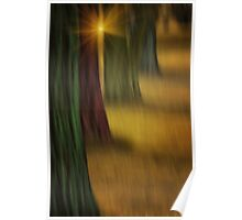 THE RAINBOW FOREST Poster