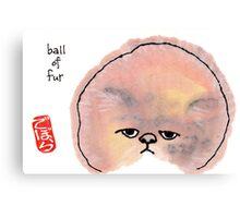 Ball of Fur Canvas Print