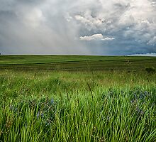 Endless wheat fields after the storm by faczen